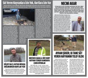 EYÜPSULTAN KÖYLERİNİ KURTLAR BASTI ÇOK SAYIDA HAYVAN TELEF OLDU İstanbul'un kuzeyi Eyüpsultan'a bağlı Ağaçlı, Odayeri ve Çiftalan Köylerini basan kurtlar 3. Yılda 150 adet  manda hayvanını telef etti. Telef olan hayvanları yerinde görüntüleyerek köylülerin şikayetlerini dinledik.